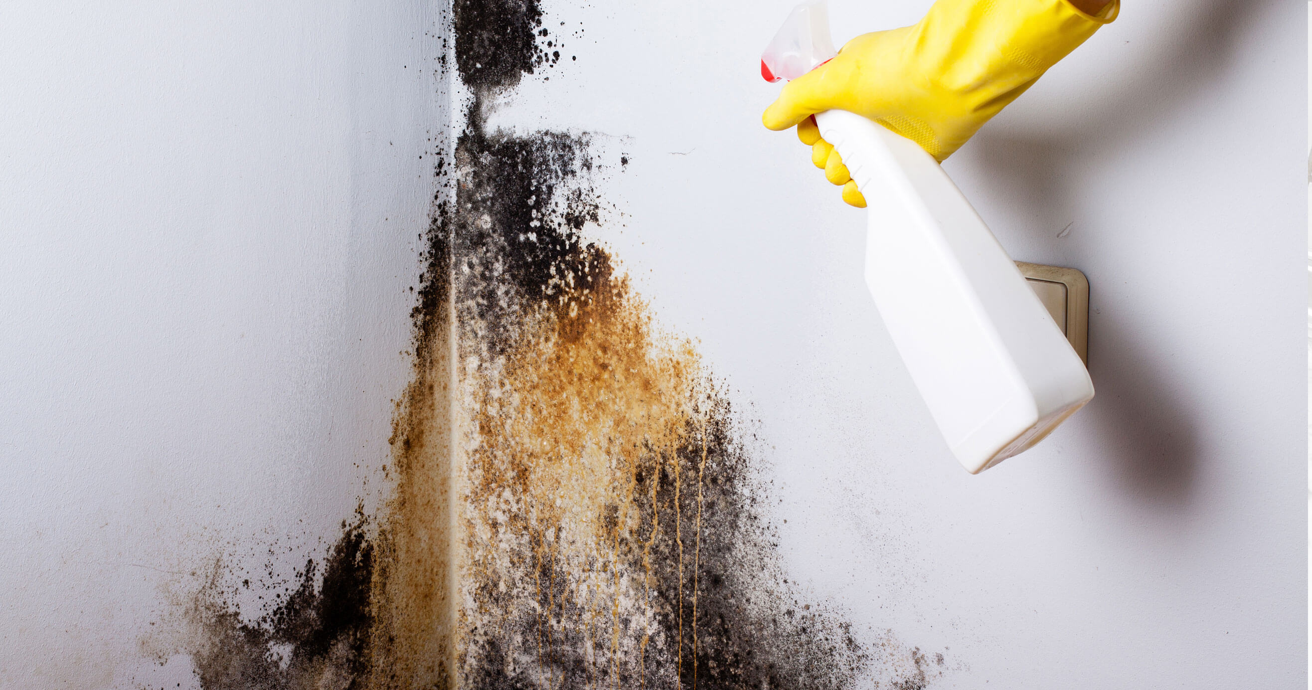 Removing black mold on a wall