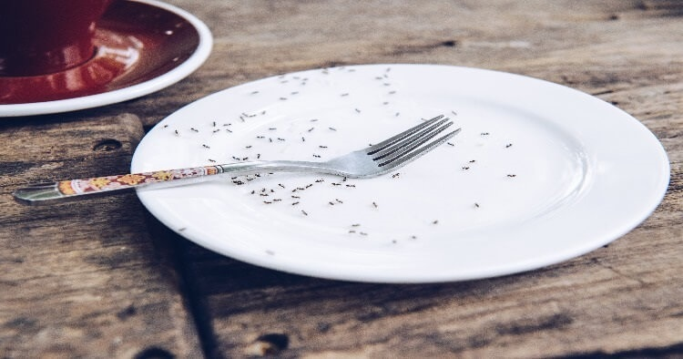 ants crawling on plate in kitchen