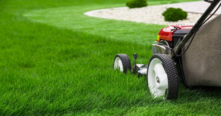 Taking care of your lawn