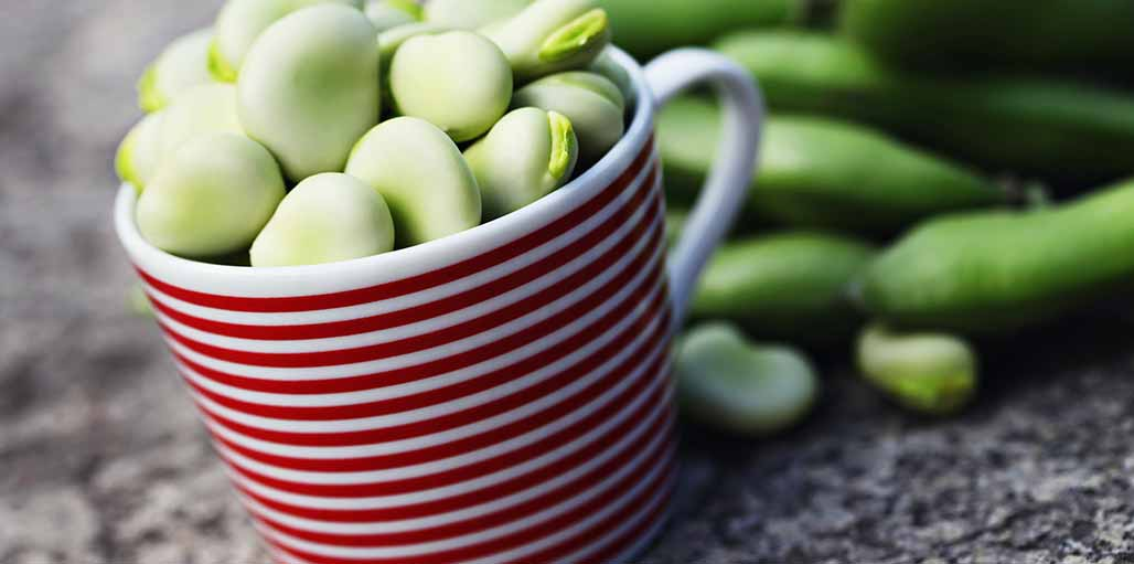 Cup with red stripes with broad beans inside