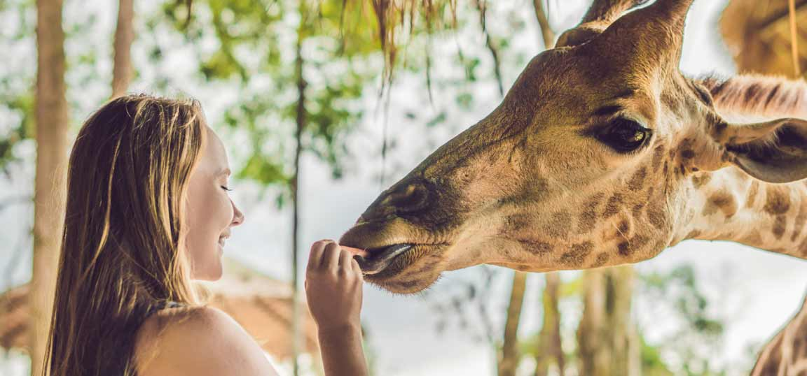 Girl feeding a giraffe