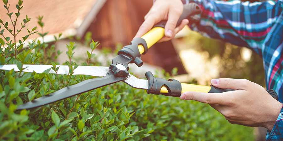 Take care of your garden before winter
